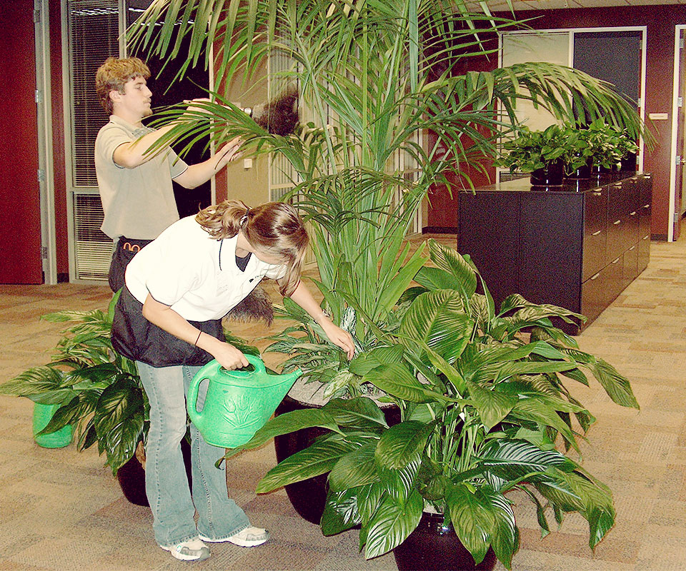 Once The Plants Are Delivered And Installed Out Plant Maintenance  Technicians Take Over And Perform Ongoing Plant Care At Your Location On A  Weekly ...