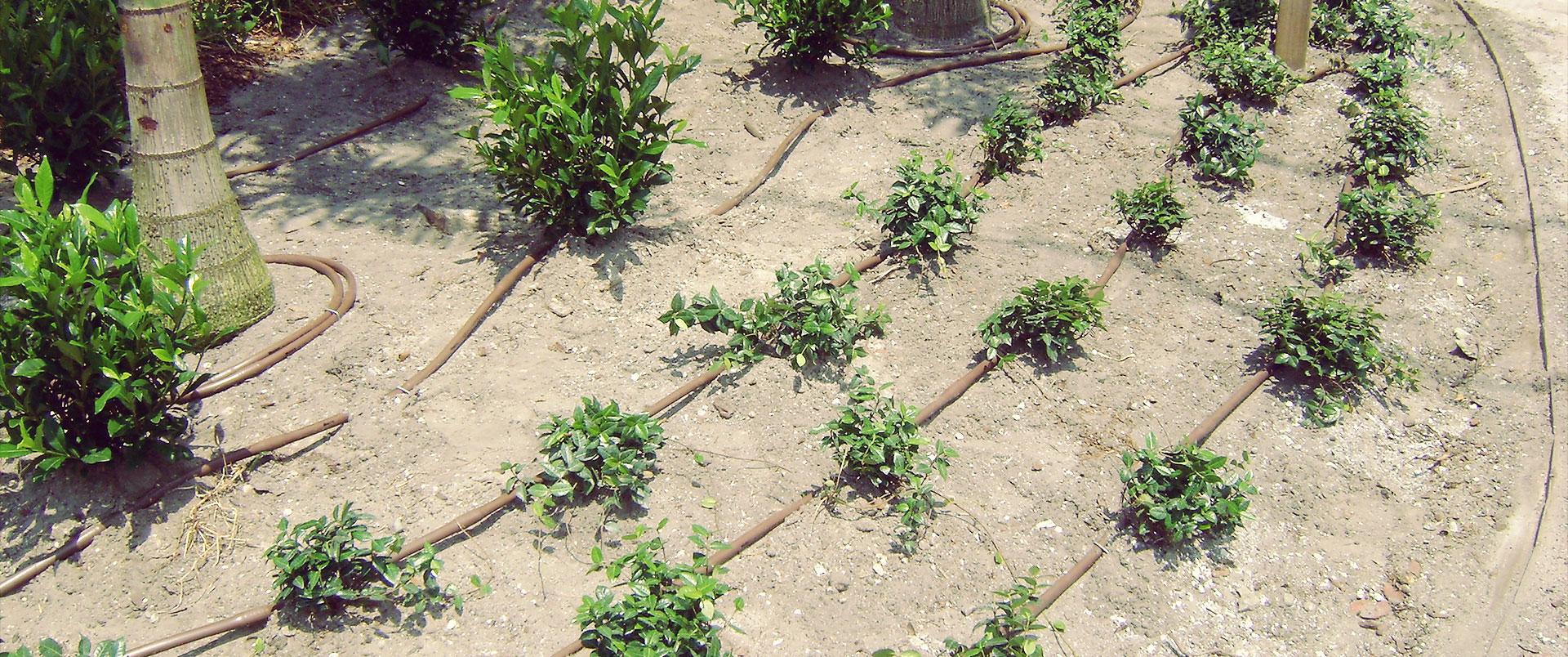 Irrigation Design & Requirements, Sherman Oaks landscape designer